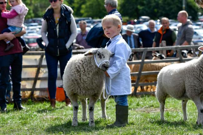A young sheep handler at Malham Show last year. Picture: Andy Garbutt.
