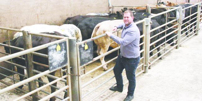 James Robertshaw, CCM multiple prime cattle buyer. Picture: Moule Media