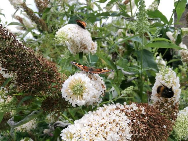 Letter: Bees and neonicotinoids