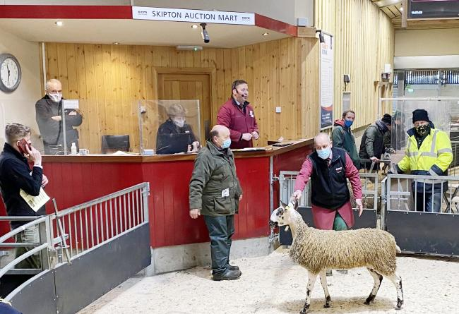 John Mason is pictured in the Skipton sale ring with the family's £500 top price BFL gimmer hogg