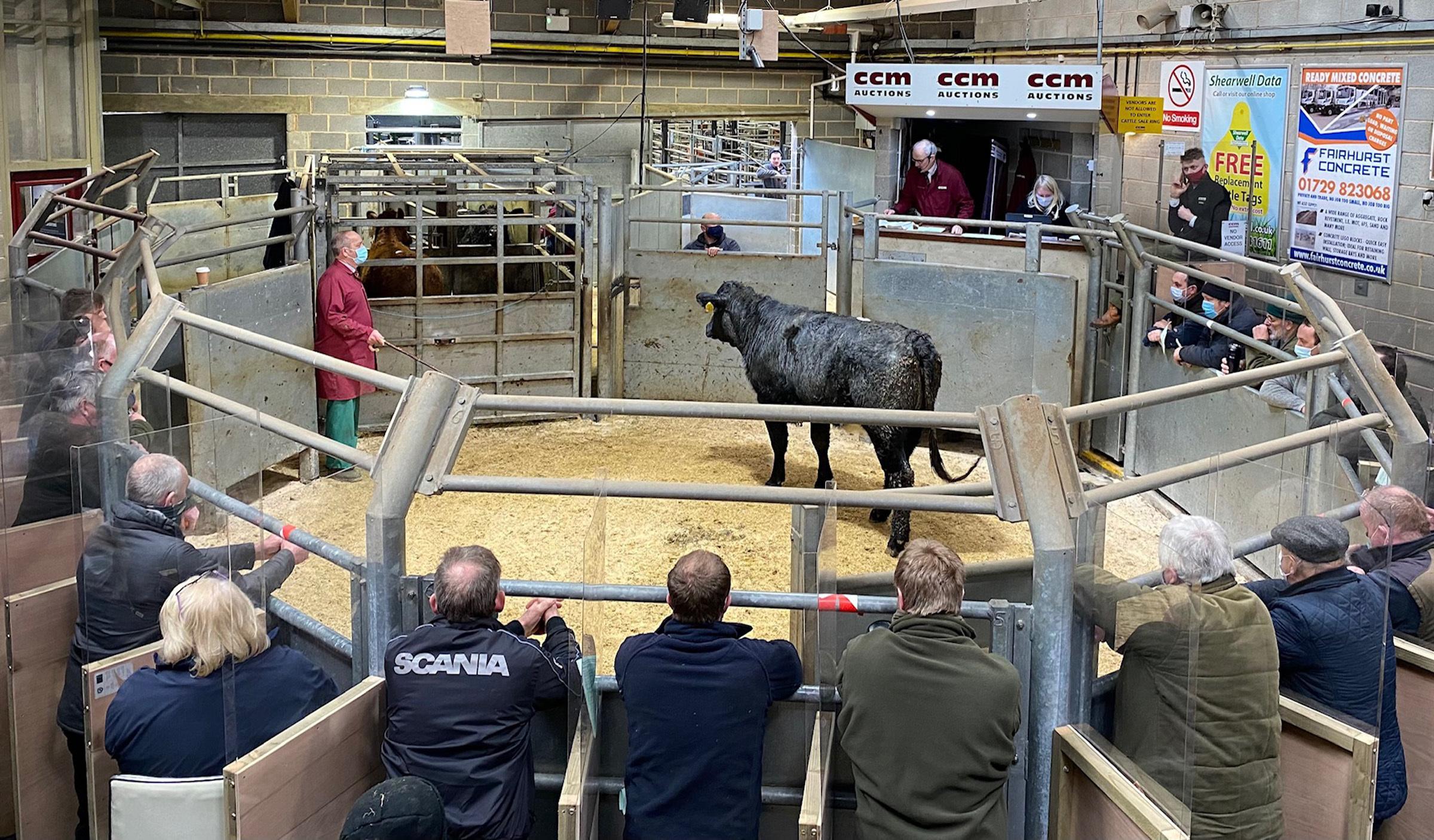 24 prime cattle for all tastes on offer