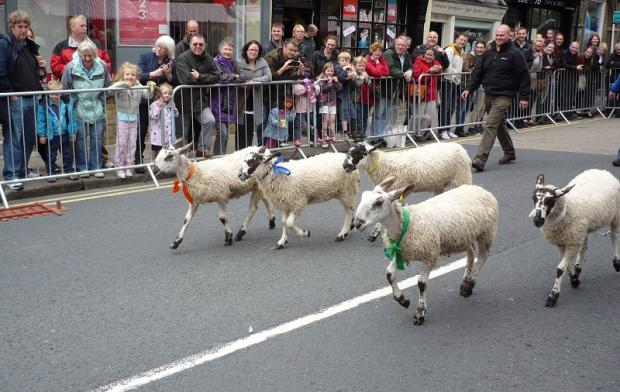 The sheep race along Skipton High Street