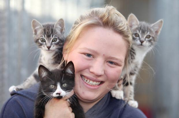 Cattery assistant Abbie Spensley with Ace, Ajax and Archie