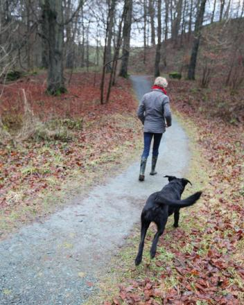 A dog-walker in Strid Wood