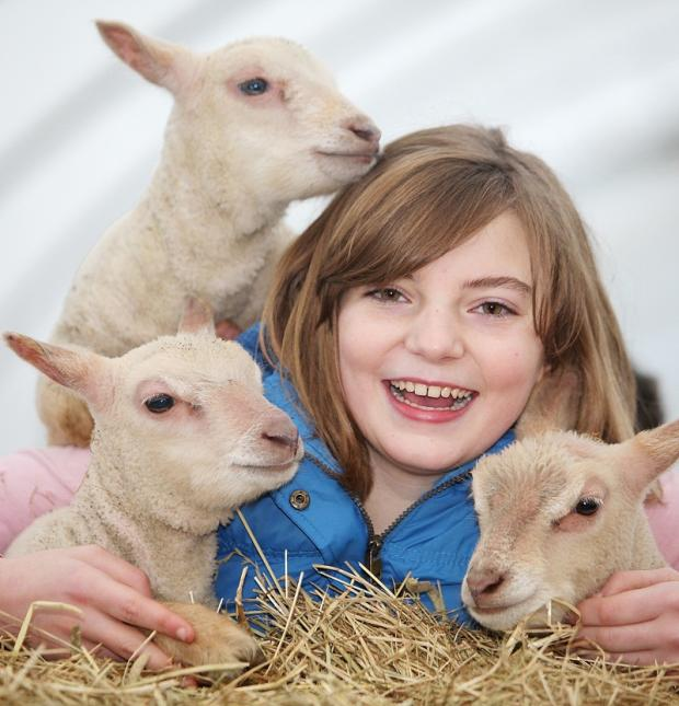 Daniel Leeming's 11-year-old sister, Ellie, with the three Charollais lambs Holly, Star and Frank