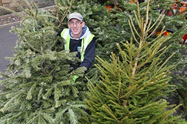 Council worker Gareth Drury with Christmas trees collected in Grassington town square