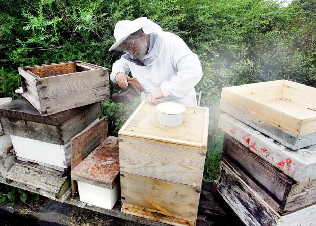Wharfedale Beekeepers Association secretary Alan Thompson tending to his bees