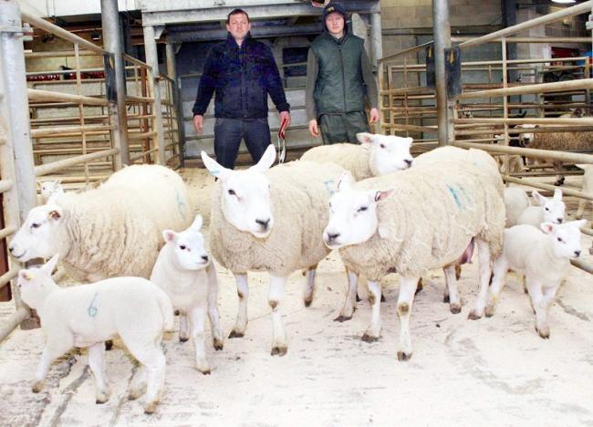 Low Bentham breeder takes championship at CCM Skipton Easter