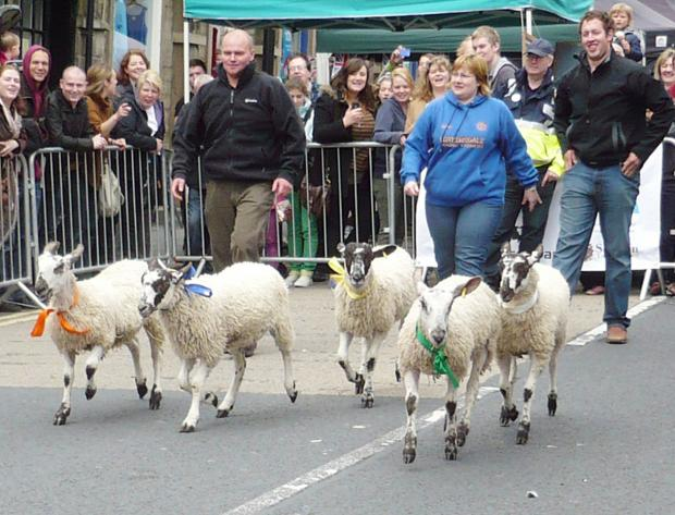 Craven Herald: Skipton's Sheep Day will not take place this year