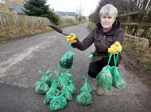 Hellifield resident Patsy Mellor  with 14 of the bags of dog dirt she has picked up on Haw Lane