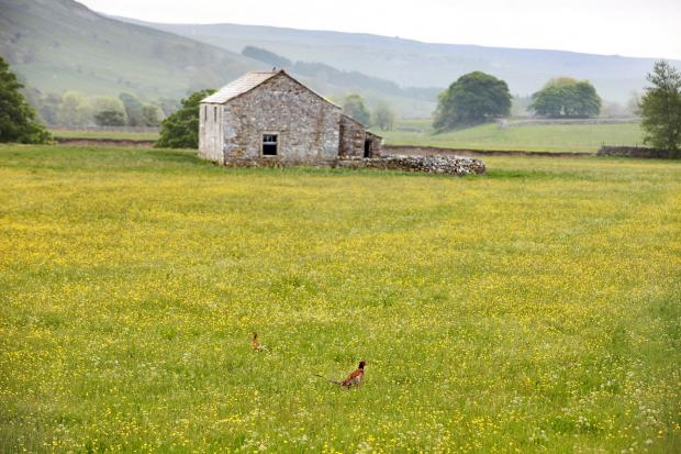 The Government is proposing to allow barns to be turned into homes without the need for planning permission