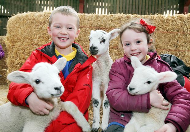 Louie Barlow, six, and Sophie Wood, five, make some new friends at Thornton Hall Farm