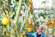 Growing With Grace founder Neil Marshall with his bumper crop of tomatoes
