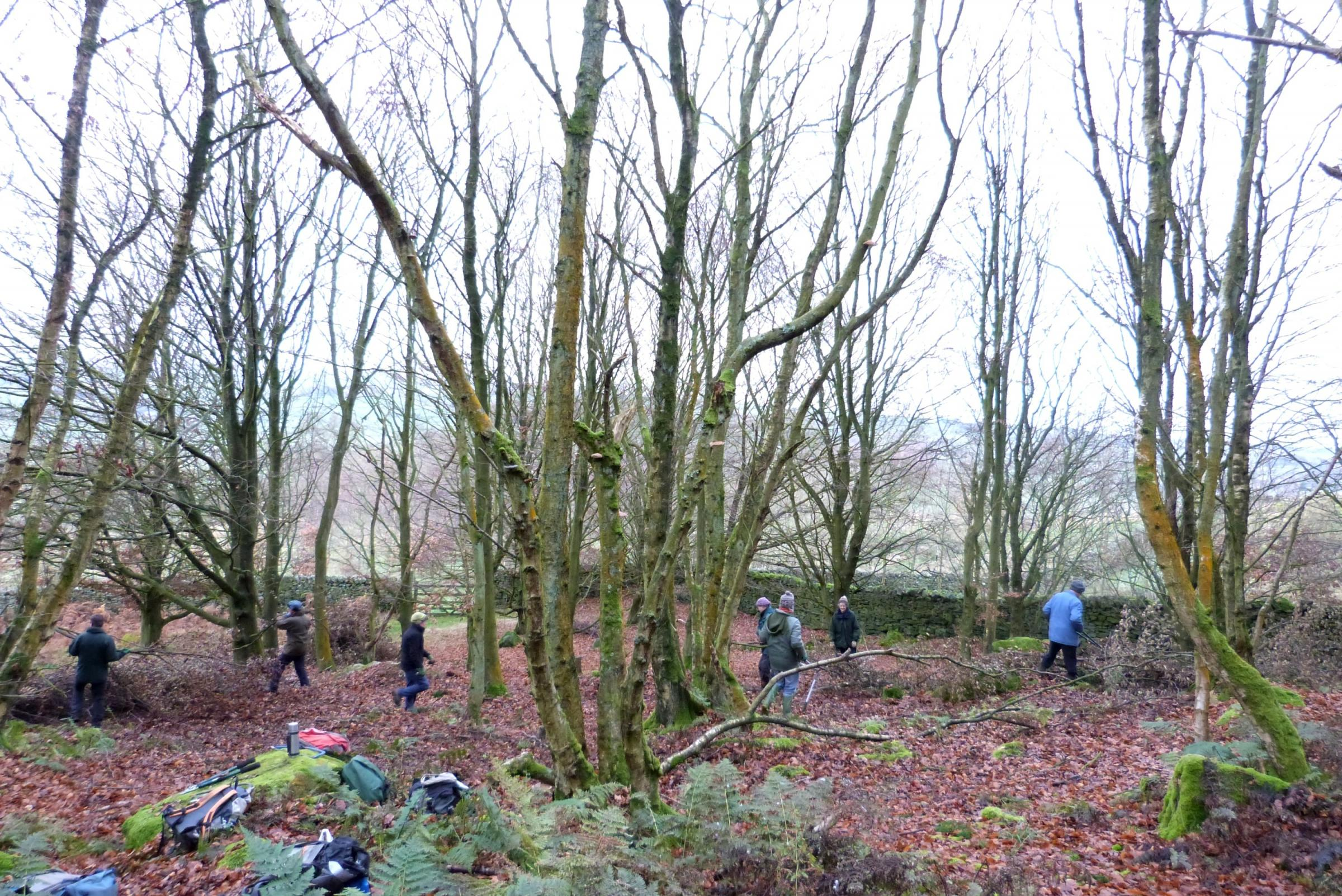 Conservation volunteers work at Cleatop Park Wood