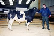 Mark Keighley with his Skipton young bull reserve champion and top price achiever.