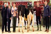 Pictured in the Skipton ring with the opening April Craven Dairy Auction champion and reserve are, from left, judge Colin Whitelock, NMR's Angie Lockwood, champion Suzy Lawson, reserve champion Peter Baul and Shepherd Agri's Megan Thomas