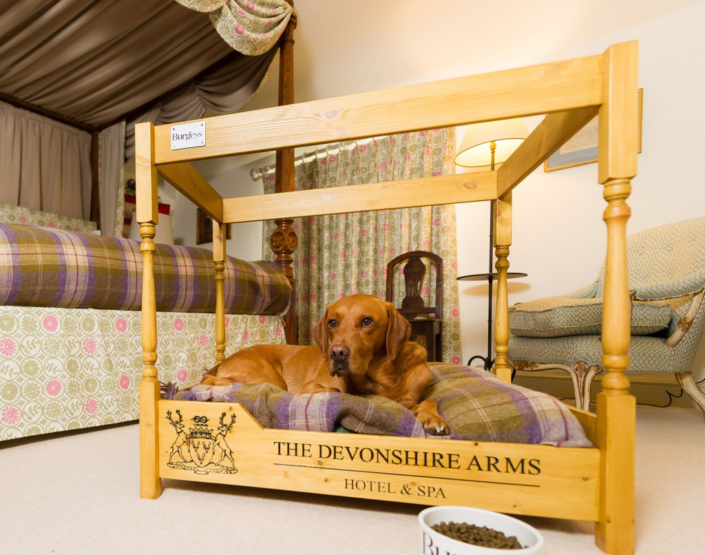 A dog enjoys a four poster bed at the Devonshire Arms Hotel