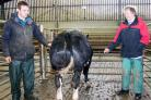 : James Huck, left, with his red rosette-winning under 10-months young bull, joined by judge and buyer Anthony Swales. Picture by Moule Media Skipton