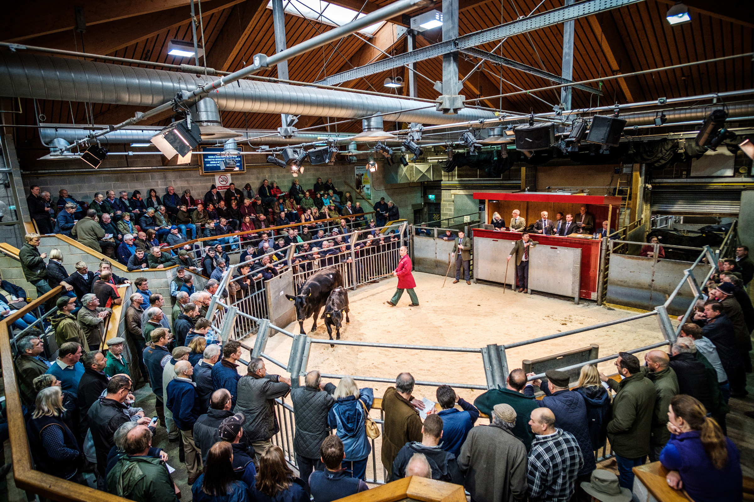 Dispersal of the Aberdeen-Angus herd in the ring at Skipton Auction Mart was deemed a resounding success.  Picture by Guy Carpenter, Gullwing Photography