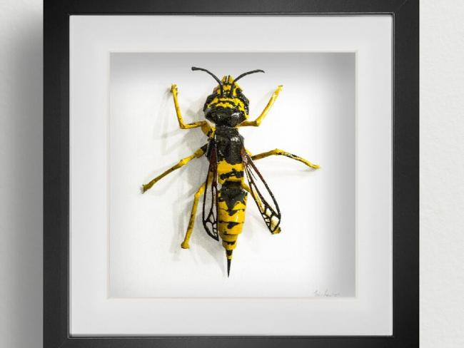 Common wasp, by Jody Lawson